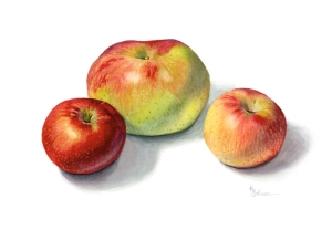 Apples-watercolor © 2015 Karen A. Johnson