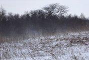 Blowing snow © Karen A Johnson